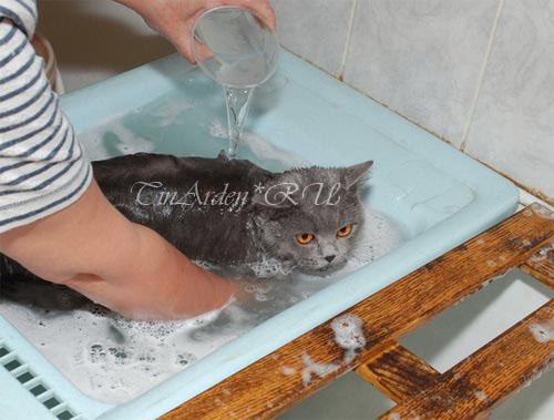 http://www.british-cat.ru/img/kupanie_bruni_big.jpg